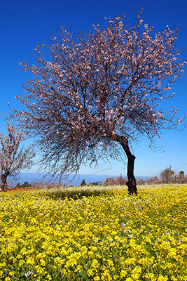 Flowering Tree Methode